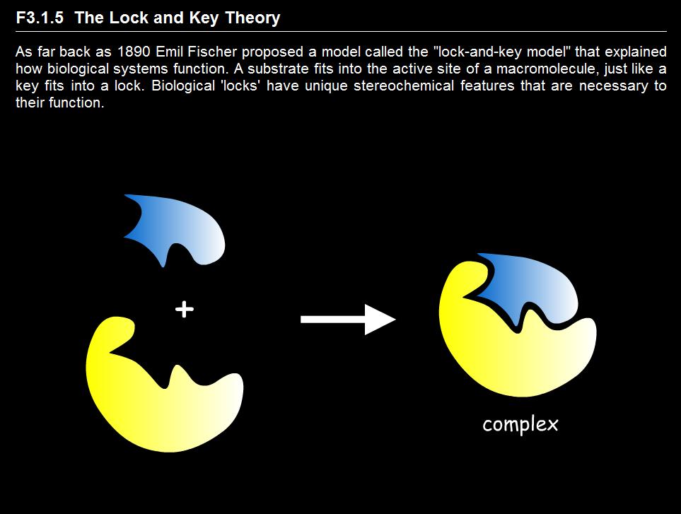 分子对接的模型:锁-钥模型