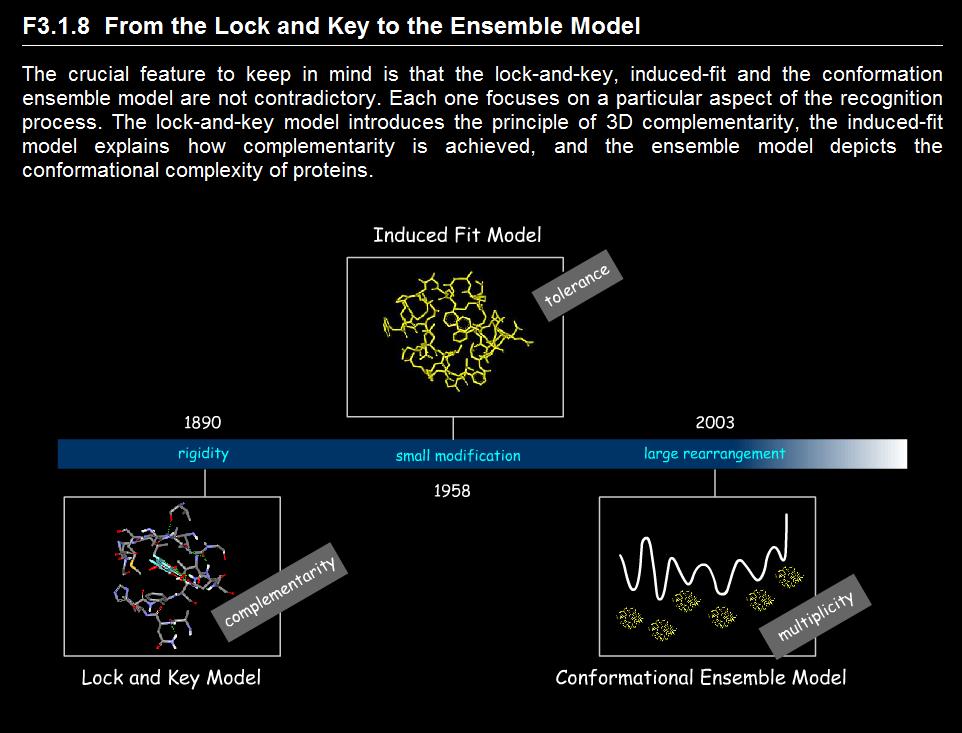分子对接的模型:从锁-钥到构象系综