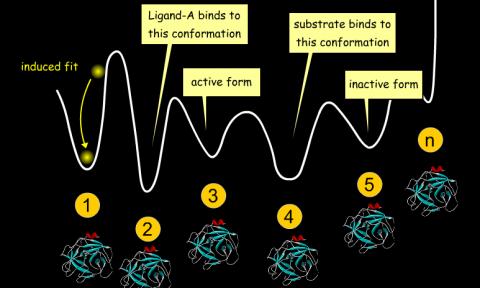 分子对接模型:构象系综