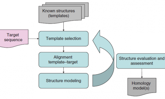 homology modeling workflow