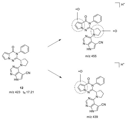 化合物12的体外代谢产物