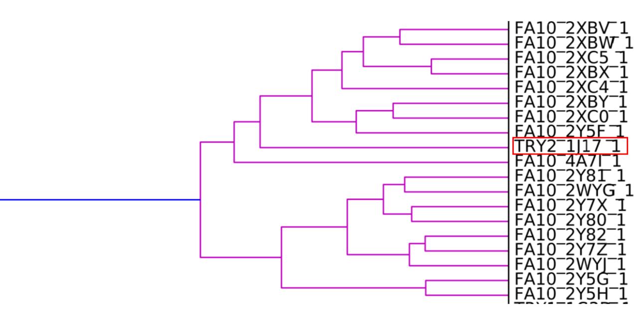 图6. FXa的SiteHopper分级聚类。胰蛋白酶结构所代表的突变型FXa结合位点用红框高亮显示。
